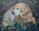 pet portrait - golden retriever