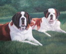 pet portrait - St Bernards